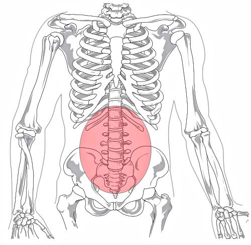 500px lumbar_region_in_human_skeleton svg pregnancy and lower back pain gokhale method institute