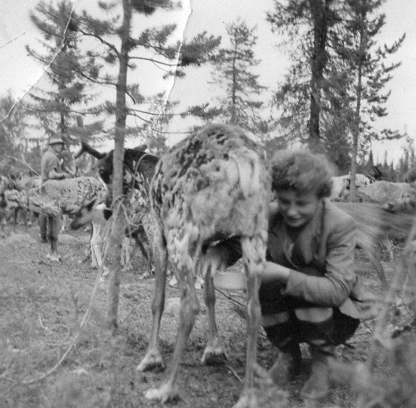 Fredrik's mother Ingrid milking a reindeer in the 70's